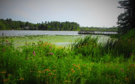 lower-south-park-fishing-dock